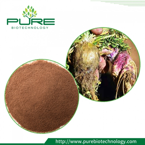Black Maca Extract Powder